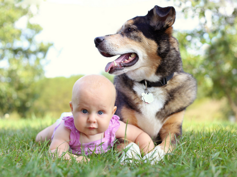 Teaching Parents How to Introduce Babies and Pets